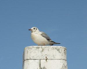 vogel op dak